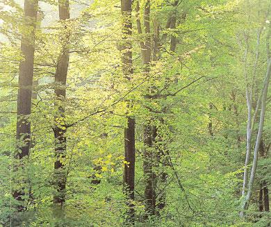 Šuma - Page 2 001-wald