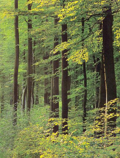 Šuma - Page 2 011-wald