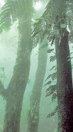 wald anpflanzen welche bäume