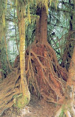 Regenwalder Stehen Selten Auf Fruchtbarem Boden Welt Der Pflanzen